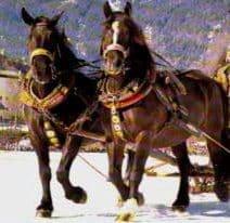Pferdesegnung und Andacht